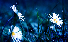 Flowers, grass, Macro