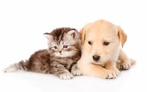 dog, puppy, kitten, Friends, friendship