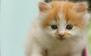 котёнок, малыш, мордочка, взгляд