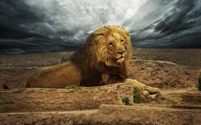 león, Rey de la selva, depredador