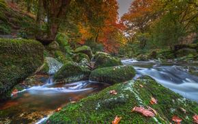 Dartmoor National Park, Devon, england, Dartmoor National Park, Devonia, England, river, stones, moss, trees, autumn