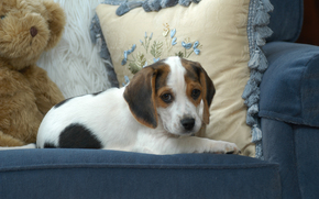 beagle, dog, puppy, baby, Teddy Bear, cushion, chair