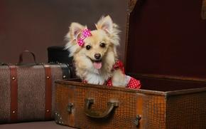 Corsa, cane, valigia