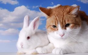 кот, белый кролик, кролик, друзья