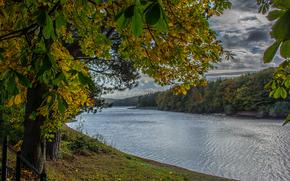 秋, 川, 木, 風景