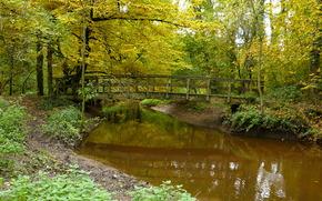 осень, лес, мост, речка, природа