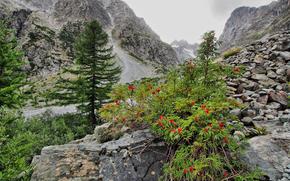 Montagnes, noyaux, arbres, paysage