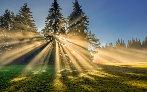 field, trees, RAYS OF THE SUN, landscape