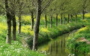 small river, trees, Flowers, nature