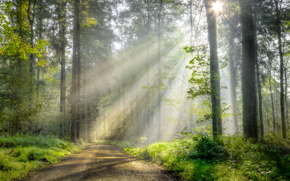 forest, road, trees, RAYS OF THE SUN, landscape