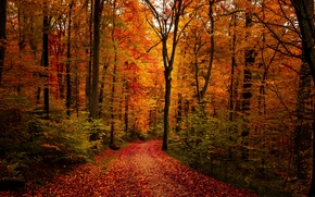 foresta, stradale, autunno, alberi, paesaggio