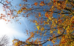sky, branches of trees, autumn, nature