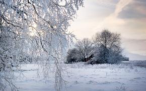 winter, field, trees, home, landscape