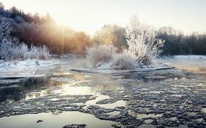 inverno, fiume, foresta, alberi, paesaggio