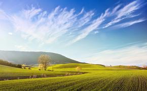 campo, Colline, autunno, alberi, paesaggio