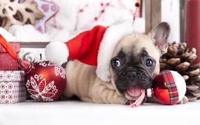Ano Novo, Bulldog Francês, cão, cachorro, boné, Bolas, Brinquedos