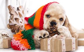 Новый год, Американский кокер-спаниель, собака, щенок, шапка, подарки, шишка