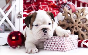 Новый год, Английский бульдог, собака, щенок, подарок, коробка, шарик, игрушка