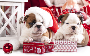 Новый год, Английский бульдог, собаки, щенки, колпак, подарок, коробки, шарик, игрушка
