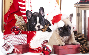 New Year, French Bulldog, Dog, Puppies, gifts, Boxes, cap, snowflake, Cones, Balls, Toys
