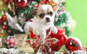 New Year, Chihuahua, dog, puppy, doggie, mug, snowflake, ball, ornamentation