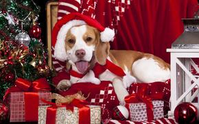Año Nuevo, perro, tapa, abeto, regalos, linterna, Bolas, Tartán