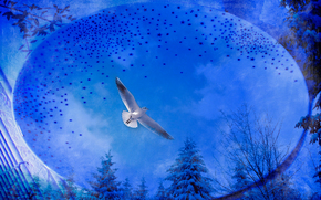 winter, sky, seagull