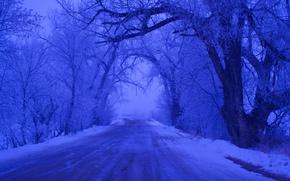 invierno, carretera, árboles, paisaje