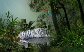 white tiger, predator, Parrot on the tree