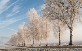 field, road, trees, frost, landscape