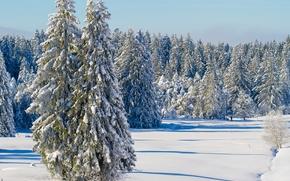 зима, снег, ели, деревья, пейзаж