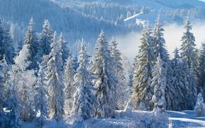 горы, зима, снег, ели, деревья, пейзаж