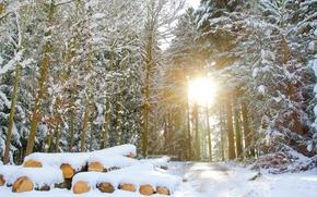 zima, las, drzew, droga, krajobraz