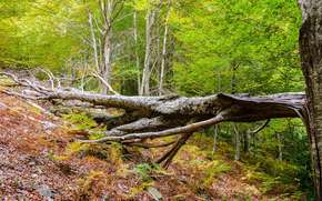 forest, trees, broken tree, nature