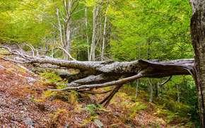 foresta, alberi, albero rotto, natura