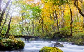 秋, 川, 森, 木, 橋, 自然
