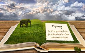 book, sky, elephant, frog