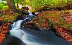otoño, rkchka, árboles, puente, naturaleza