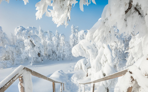Southern Urals, Russia, winter, snow, drifts, trees
