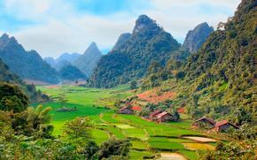 campi di riso, Montagne, domestico, alberi, Vietnam, paesaggio