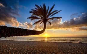 закат, море, пальма, берег, пейзаж