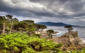 Pebble Beach, California, The Lone Cypress, Carmel Bay, 17-mile drive, Pebble Beach, California, Lone Cypress, bay, rock, trees, cypresses, coast, landscape