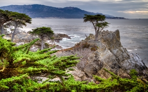 Pebble Beach, California, The Lone Cypress, Carmel Village, 17-Mile Drive, Pebble Beach, California, Lone Cypress, bay, roccia, alberi, cipressi, costa