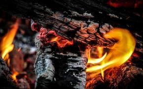 FALO, legna da ardere, carboni, fuoco, fiamma