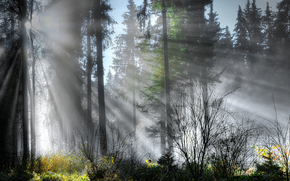 forest, trees, RAYS OF THE SUN, landscape
