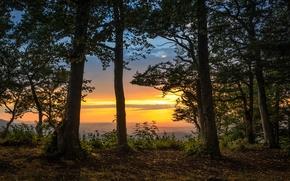 foresta, alberi, tramonto, paesaggio