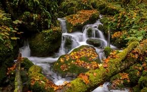 осень, речка, деревья, лес, водопад, природа