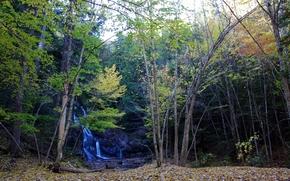 осень, лес, деревья, водопад, природа