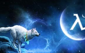 белый волк, 3d, art