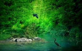 bosque, estanque, garzas, naturaleza